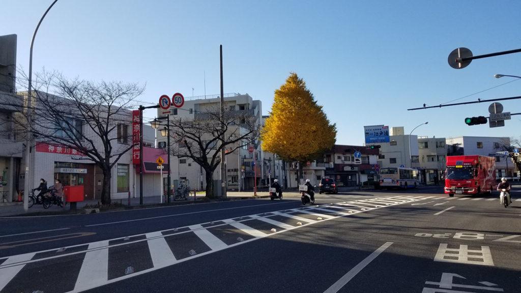 本牧の大きな銀杏の木